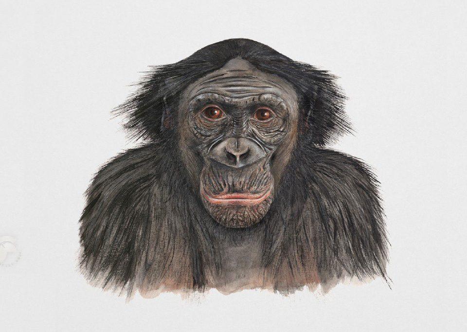 Header-BonoBo-Urheberrechtsverletzung