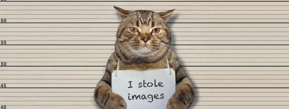 """Katze mit Schild """"Ich klaue Bilder"""""""