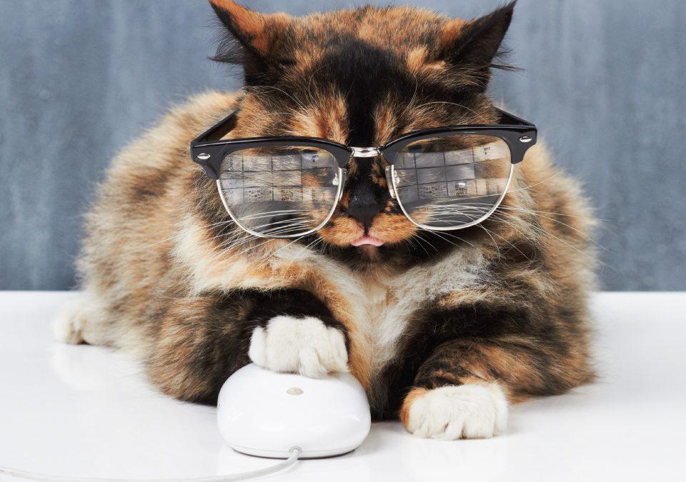 Katze mit Brille und Pfote auf Computermaus